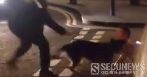 Un chien policier attaque à la jugulaire un individu au sol avec les encouragements de deux agents
