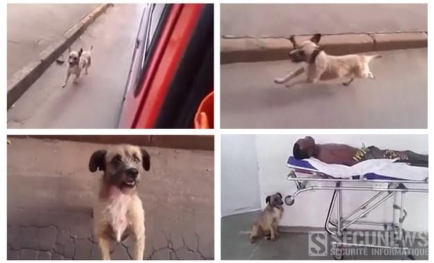 Le chien fidèle d'un sdf poursuit sans relâche l'ambulance qui transporte son maître