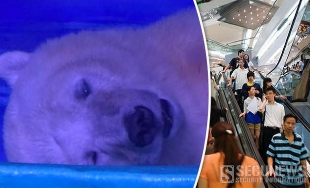 Signez la pétition pour sauver Pizza l'ours polair exposé dans un centre commercial en Chine